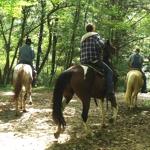 Nantahala Village Riding Stable | Bryson City, North Carolina | Bryson City Outdoor Adventure | My Smoky Mountain Guide