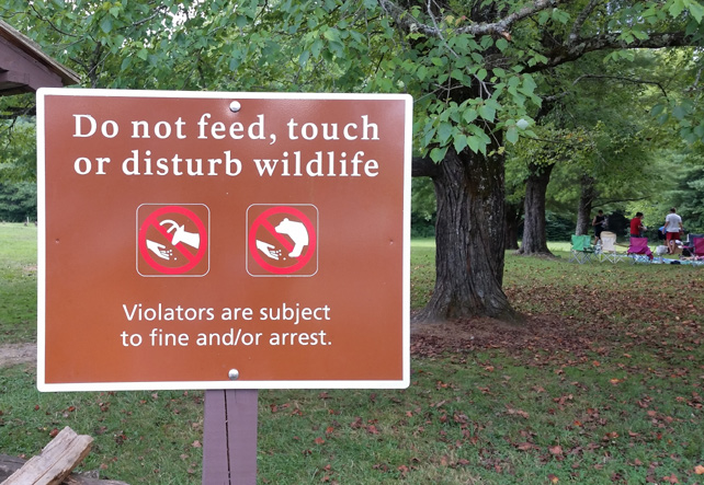Do Not Feed, Touch, or Disturb Wildlife | My Smoky Mountain Guide
