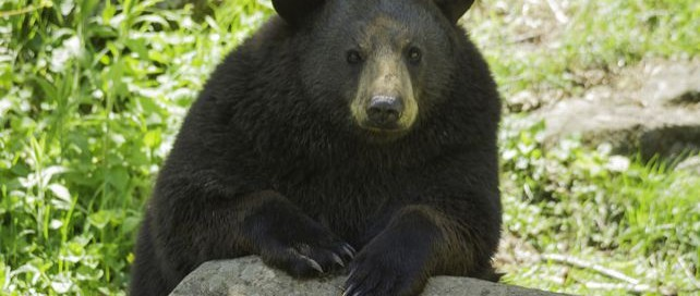 I Don't Need Your Handouts   Do Not Feed the Bears