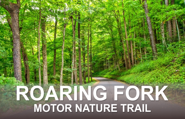 Roaring Fork Motor Nature Trail – Auto Tour