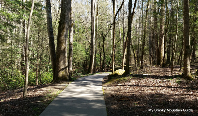 Beautiful Path | Sugarlands Valley Nature Trail