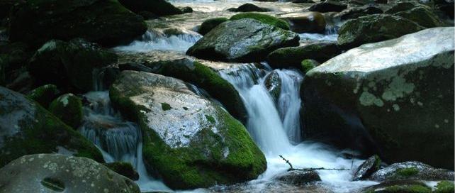 Gatlinburg Trail | 38 Popular Trails | Great Smoky Mountains National Park