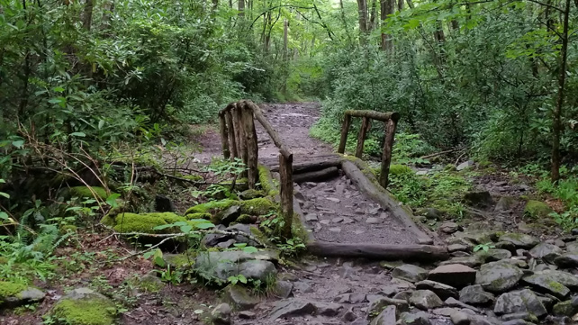 Middle Prong Trail | Small Footbridge | My Smoky Mountain Guide