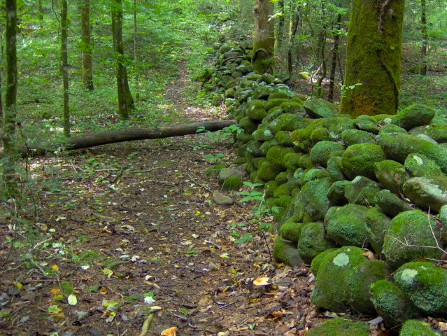 Moss Covered Stone Wall | Old Sugarlands Trail | Great Smoky Mountains National Park