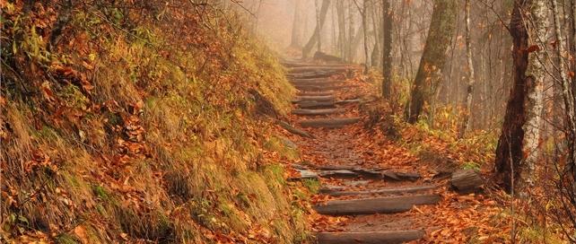 Appalachian Trail | Great Smoky Mountains National Park