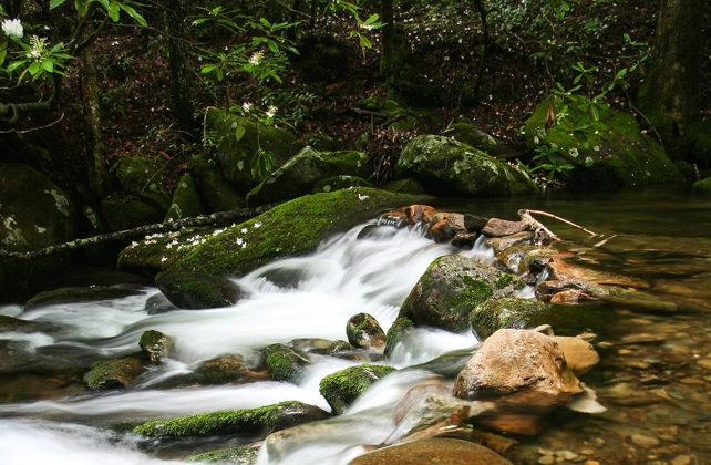 Hen Wallow Falls | Gabes Mountain Trail | My Smoky Mountain Guide