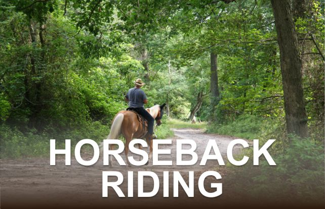 Horseback Riding | Things to Do in Great Smoky Mountains National Park