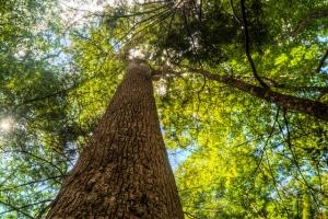 Ramsey Cascades   Great Smoky Mountains National Park