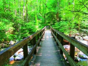Ramsey Cascades Trail Bridge | My Smoky Mountain Guide