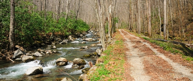 Smokemont Loop Trail   38 Popular Day Hikes   My Smoky Mountain Guide