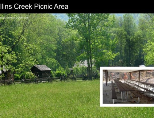7. Collins Creek Picnic Area