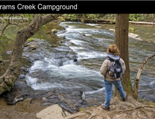 1. Abrams Creek Campground