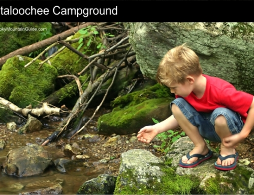 6. Cataloochee Campground