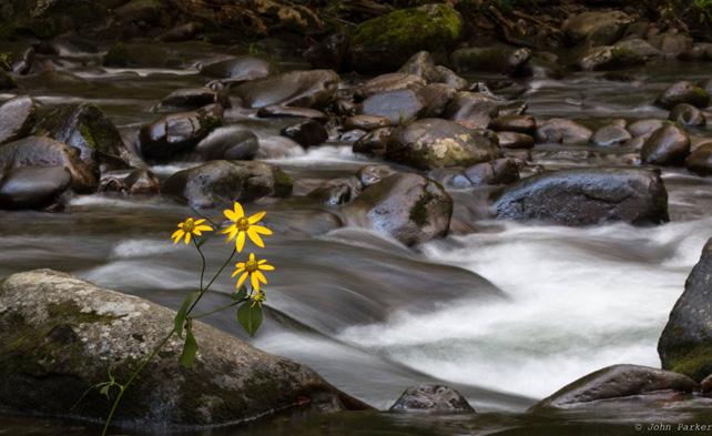 Little River at Elkmont | Photo: © John Parker