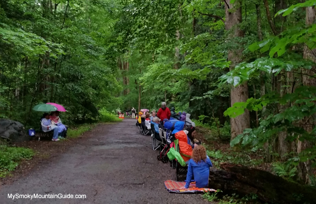 Waiting for the Synchronous Fireflies | Elkmont | Great Smoky Mountains National Park