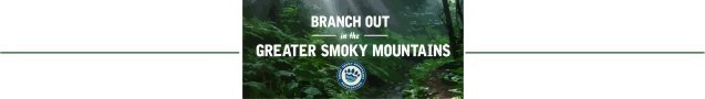 Branch Out in the Greater Smoky Mountains