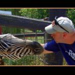 Smoky Mountain Deer Farm Exotic Petting Zoo and Deer Farm Riding Stables   Sevierville, TN   Sevierville Attractions   My Smoky Mountain Guide