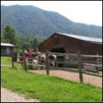 Gilbertson's Lazy Horse Retreat | Townsend, Tennessee | Lodging | Townsend Cabin Rentals and Chalets | My Smoky Mountain Guide