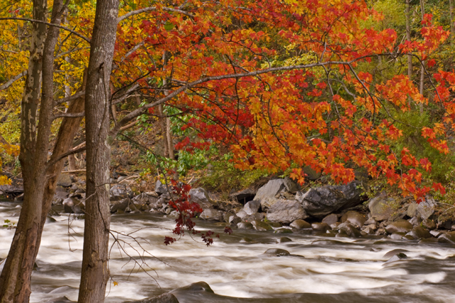 Autumn on the Pigeon River | My Smoky Mountain Guide