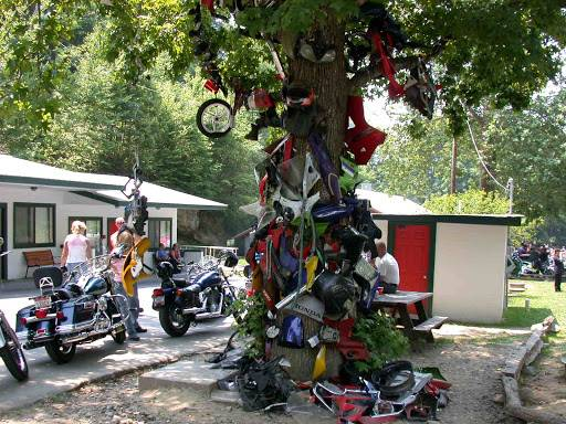 Tail of the Dragon | Tree of Shame | Great Smoky Mountains National Park