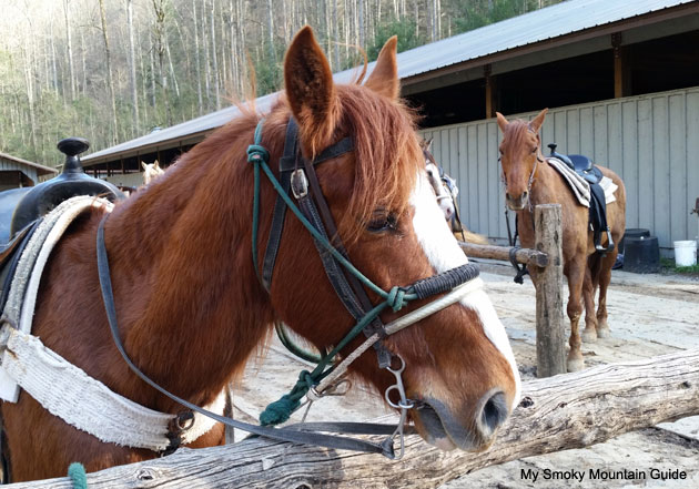 Sugarlands Riding Stables | Great Smoky Mountains National Park
