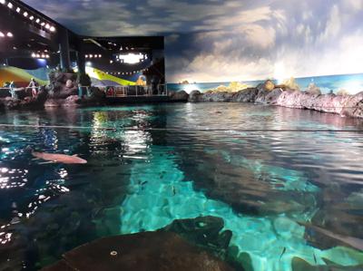 Main Aquarium at Ripley's Aquarium of the Smokies | Gatlinburg, TN