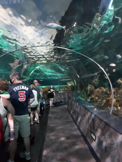 Moving Sidewalk at the Ripley's Aquarium of the Smokies | Gatlinburg, TN
